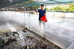 Vĩnh Phúc: Kiếm nửa tỷ mỗi năm nhờ nuôi ếch