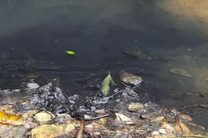 Bắt khẩn cấp 3 đối tượng đổ trộm dầu thải gây ô nhiễm nguồn nước sạch Sông Đà