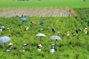 Đòn bẩy chính sách phát triển nông nghiệp, nông thôn An Giang