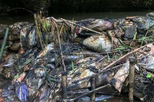 Tư vấn, xét nghiệm nước miễn phí cho người dân sau sự cố ô nhiễm nước sông Đà