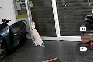 Lắp camera theo dõi chó cưng trong nhà, người đàn ông phát hiện điều bất ngờ tới rơi nước mắt