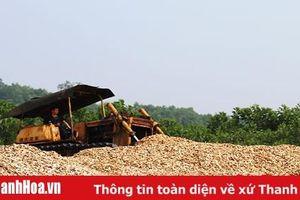 Giá trị hàng hóa xuất khẩu huyện Cẩm Thủy vượt 19% kế hoạch năm