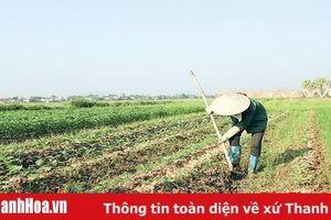 Huyện Nông Cống đẩy mạnh tái cơ cấu nông nghiệp gắn với xây dựng nông thôn mới