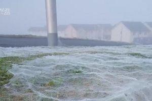 Kỳ lạ lưới nhện rộng hàng trăm mét vuông bao phủ cánh đồng