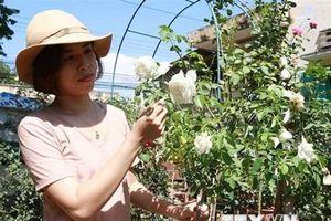 Khởi nghiệp thành công từ niềm đam mê trồng hoa hồng ngoại