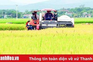 Huyện Hoằng Hóa xây dựng được 3.250 ha vùng lúa thâm canh