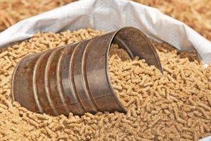 9 tháng, chi 2,8 tỷ USD nhập thức ăn chăn nuôi