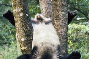 Những màn 'ảo tưởng sức mạnh' của động vật đáng yêu