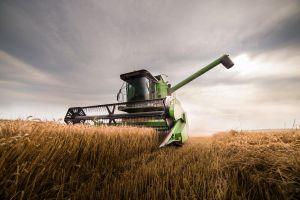 Giá lúa mì mất mốc cao nhất trong vòng 4 tháng trở lại đây