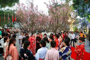Lễ hội hoa anh đào Nhật Bản - Hà Nội 2020 sẽ diễn ra từ ngày 27-30/3/2020