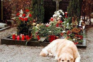 Nghĩa trang minh chứng tình bạn vượt cái chết giữa người và thú cưng