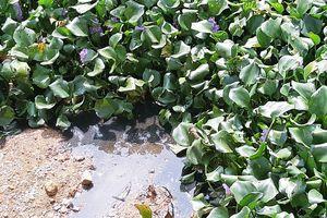 Nước hồ đen kịt, cá chết bốc mùi hôi thối do Cty gia cầm Hòa Phát Phú Thọ xả thải