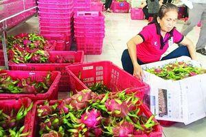 Thiếu truy xuất nguồn gốc: Nông sản đừng mơ vào Trung Quốc