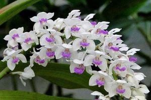 5 loại hoa phải bày phòng khách, cuối năm phất 'như diều gặp gió'