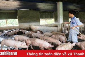 Tăng cường chỉ đạo chăn nuôi theo hướng an toàn sinh học