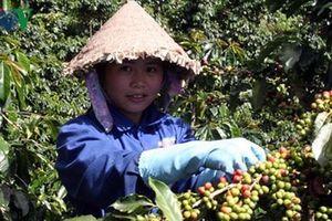 Ngành cà phê đặt mục tiêu xuất khẩu 6 tỷ USD vào năm 2030