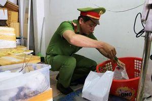 Đà Nẵng: Đình chỉ hoạt động cửa hàng phát hiện tôm hùm bơm tạp chất