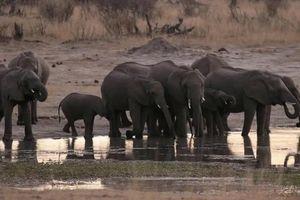 55 con voi chết đói ở Zimbabwe do hạn hán kéo dài