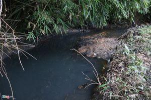 Vụ nước sông Đà nhiễm dầu: Thường trực Tỉnh ủy Hòa Bình yêu cầu thu hồi hồ Đồng Bài
