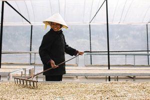 Nông sản Việt vào thị trường Hàn Quốc: Quá khiêm tốn