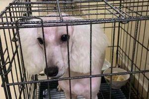 Trộm chó xong, hai 'cẩu tặc' yêu cầu chủ chó chuộc 5 triệu đồng