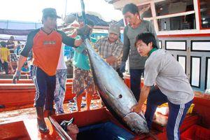 Các tỉnh Nam Trung bộ nỗ lực gỡ 'thẻ vàng' thủy sản