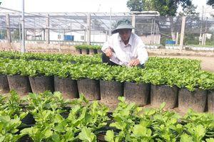 Hơn 1,3 triệu giỏ hoa phục vụ thị trường Tết cổ truyền Canh Tý