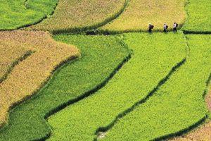 Tín dụng xanh hỗ trợ chuyển đổi sang nền kinh tế carbon thấp