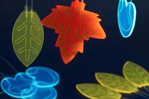 Hà Lan sáng tạo lá nhân tạo chuyển đổi ánh sáng Mặt trời thành thuốc
