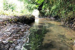 Vụ nước sạch sông Đà nhiễm dầu: Viwasupco phải chịu trách nhiệm kiểm định chất lượng nguồn nước