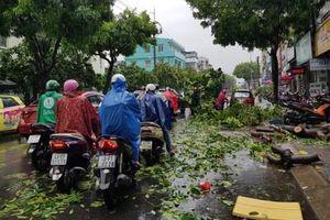 Đà Nẵng: Do ảnh hưởng bão số 5, hàng trăm cây xanh ngã đổ