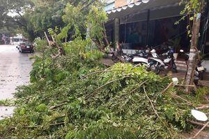 Bão số 5 gây thiệt hại lớn với Nam Trung bộ