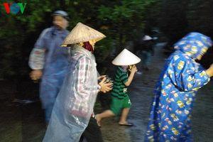 Bão số 5 đổ bộ vào Nam Trung Bộ: Cây xanh ngã đổ, nhiều nơi mất điện