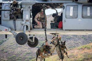 Hé lộ quy trình tuyển mộ và huấn luyện chó nghiệp vụ của đặc nhiệm Mỹ