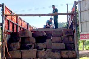 Ngăn chặn gỗ lậu ở khu vực biên giới Ngọc Hồi