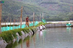 Hoàn lưu bão số 5: Người nuôi trồng thủy sản Phú Yên bị thiệt hại nặng