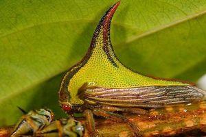 'Soi' loài bọ gai dị thường, cực hiếm gặp trên Trái đất