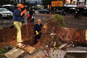 Dọn hàng ngàn tấn rác thải, khôi phục 2.000 cây xanh bị bão quật ngã