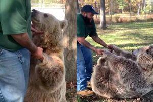 Khoảnh khắc đoàn tụ giữa người và gấu xám sau nhiều năm xa cách gây sốt mạng