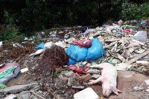 Nghệ An: Xử lý nghiêm các đối tượng vứt xác lợn ra môi trường