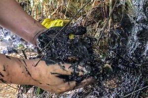 Đối mặt với sự cố môi trường, chính quyền lúng túng - người dân không biết bấu víu vào đâu!
