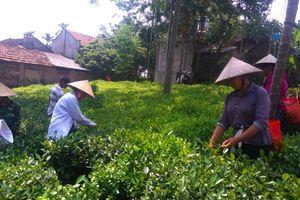 Hà Nội: Gỡ khó cho huyện nghèo