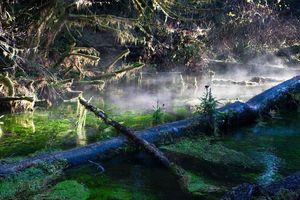 Rừng cây rêu phủ như bước ra từ truyện cổ tích