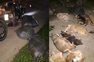 Bắt nhóm 'cẩu tặc' từ Hà Nội lên Hòa Bình trộm hơn 1 tạ chó