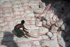 Ngành lúa gạo Thái Lan gặp nhiều khó khăn
