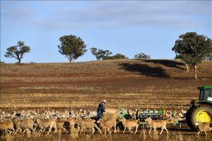 Nắng nóng kỷ lục kéo dài tại Australia