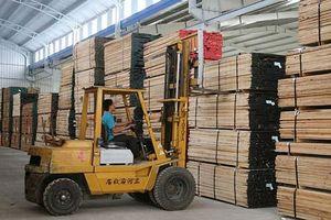 Hình thành chuỗi liên kết chế biến gỗ - Cơ hội phát triển bền vững
