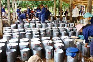 Sẽ đưa kim ngạch xuất khẩu cao su đạt trên 2 tỷ USD