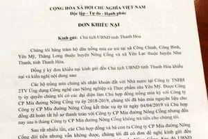 Thanh Hóa: Công ty nợ tiền mía, người dân 'cầu cứu' Chủ tịch tỉnh