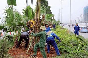 Hà Nội xây dựng kế hoạch Tết trồng cây đời đời nhớ ơn Bác Hồ Xuân Canh Tý